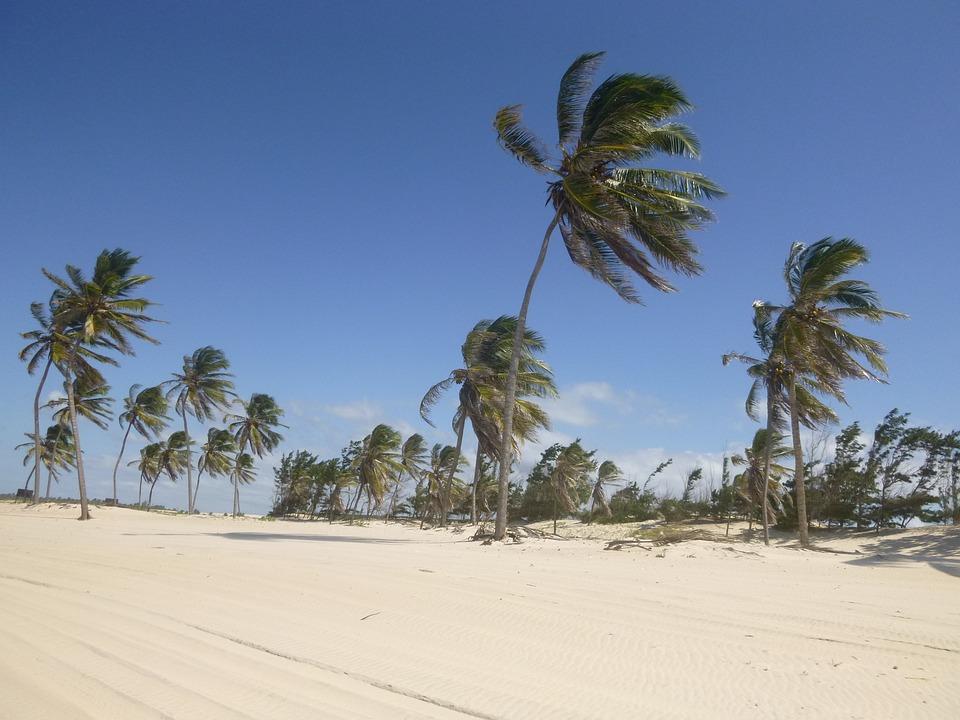 Coconut Trees, Wind, Sand, Beach, Blue Sky