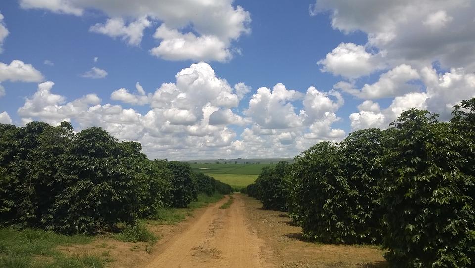 Coffee, Farm, Minas, Crop