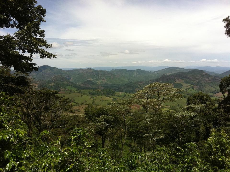 Plantation, Coffee, Nicaragua, Jungle, Landscape