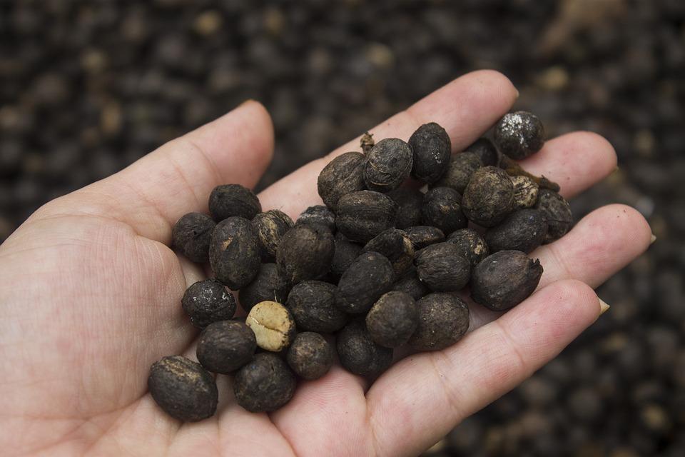 Coffee In Hand, Coffee, Hand, Seeds Cafe, Seeds
