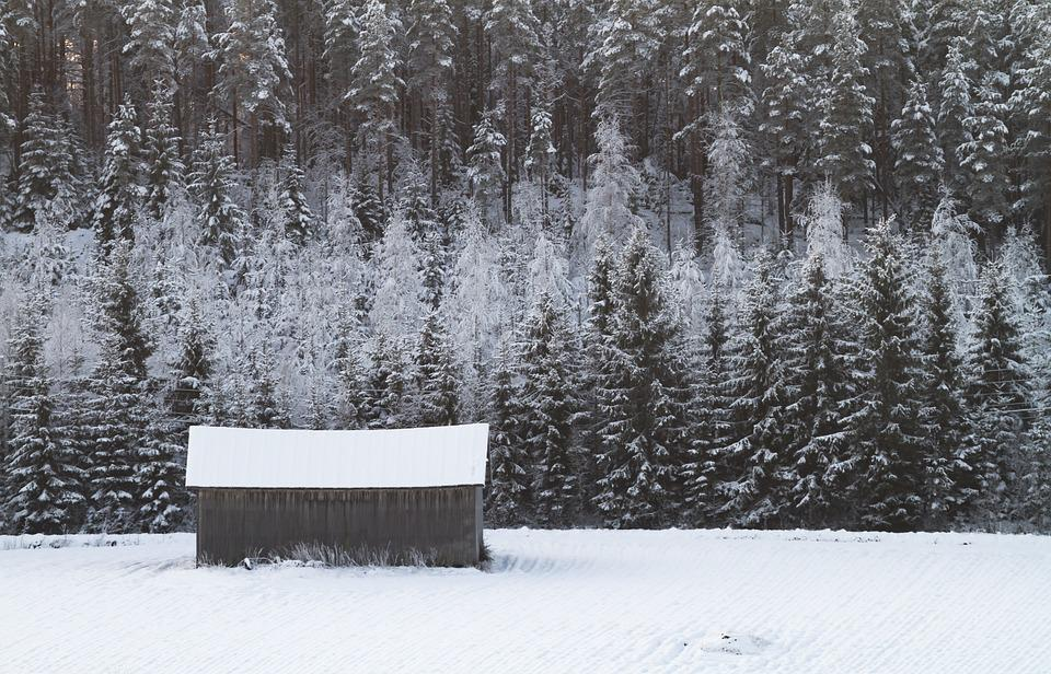 Snow, Winter, Frost, Cold, Forest, Field, Barn