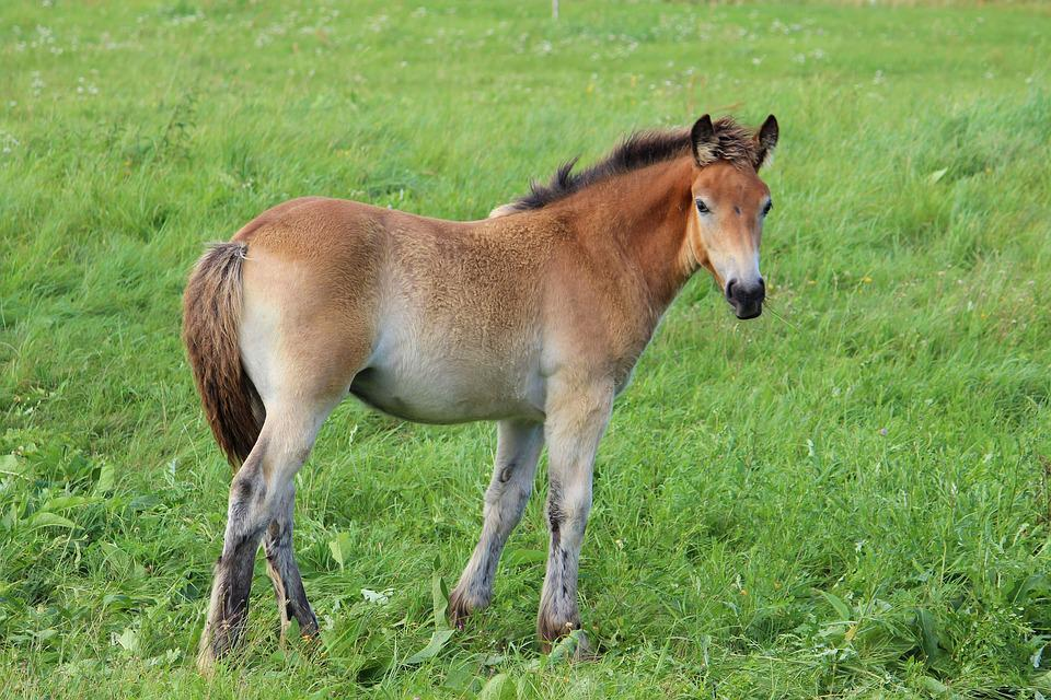 Horses, Cold Blooded Animals, Foal, Pasture, Mammal