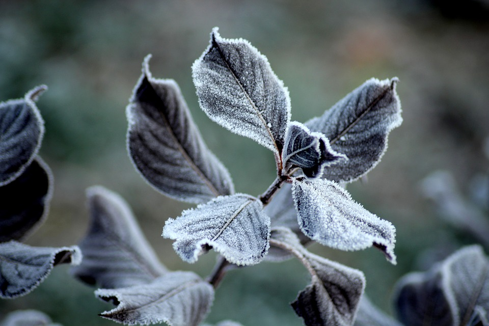 Frost, Ground Frost, Foliage, Winter, Cold, Nature