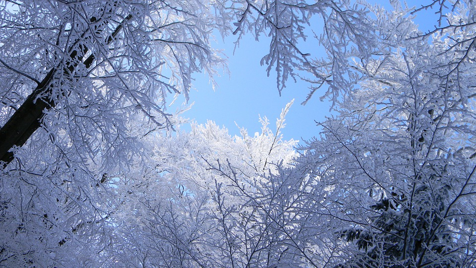Winter, Snow, Frost, Tree, Cold