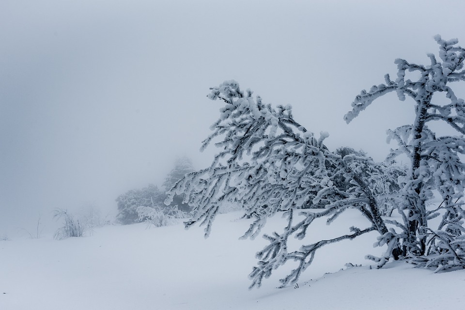 Snow, Winter, Cold, Frost, Frozen, Blizzard, Tree, Ice