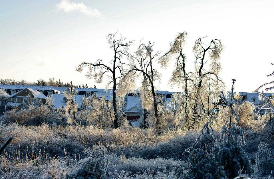 Frozen, Ice, Trees, Winter, Snow, Cold, Freeze, Icy