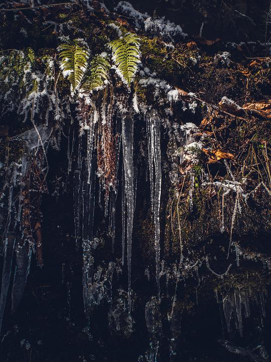 Stalactite, Frost, Leaves, Gel, Snow, Cold, Frozen, Ice