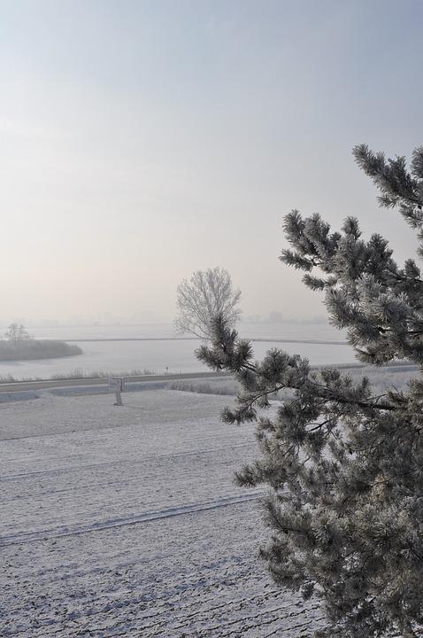 Winter, Tree, Snow, Cold, Landscape, Nature, Frozen