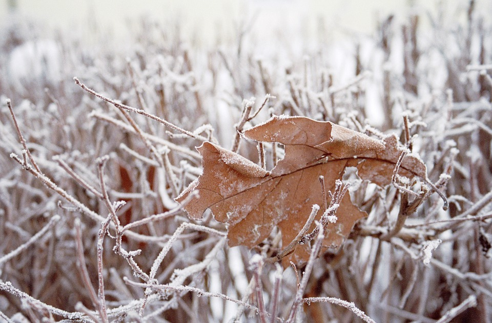 Leaf, Grass, Snow, Cold, Winter