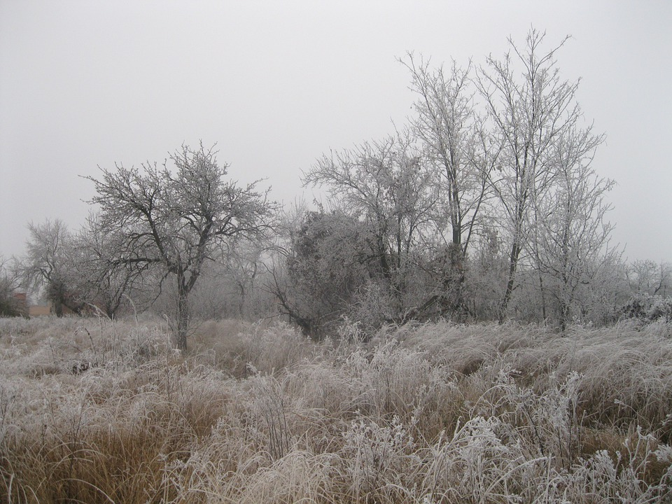 Winter, Frozen, Nature, Grass, Trees, Cold, Season, Ice