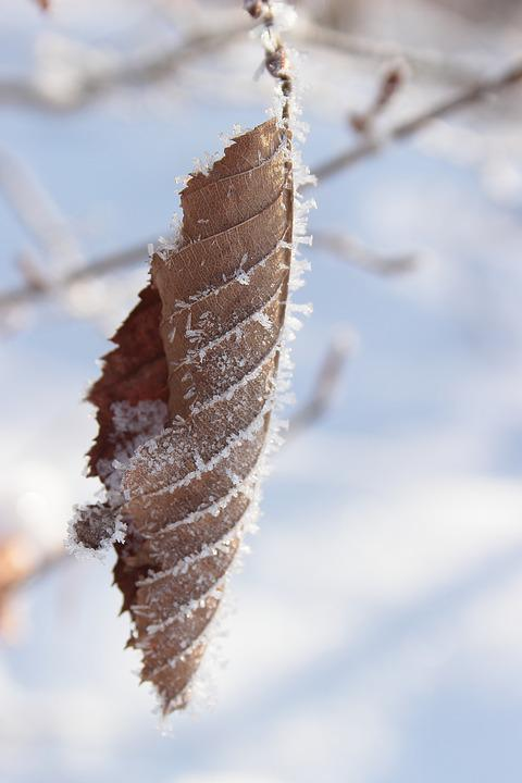 Leaf, Frost, Frozen, Cold, Leaves, Hoarfrost, Icy