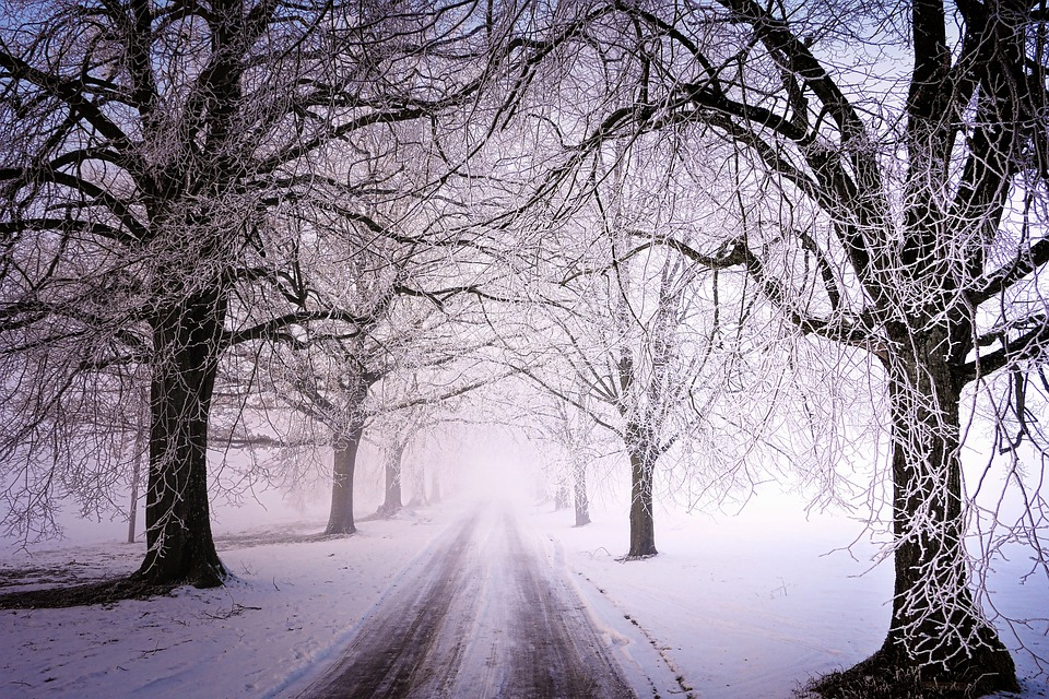 Winter, Frost, Cold, Trees, Snow, Ice, Snowflake