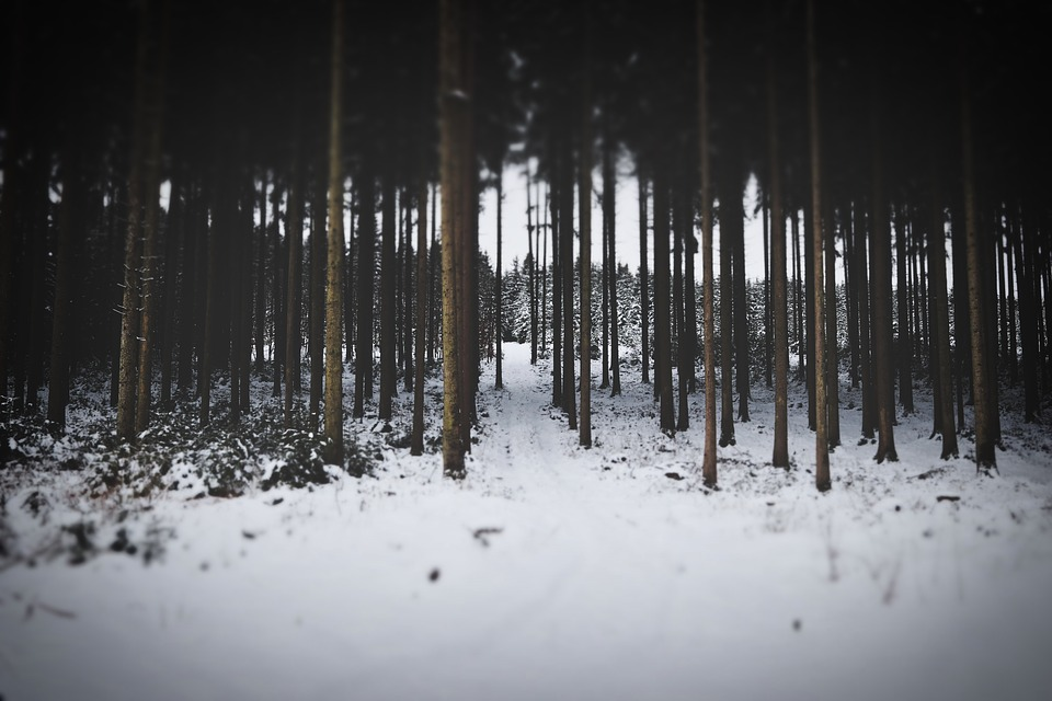 Winter, Forest, Snow, Cold, Wintry, Idyllic, Wilderness