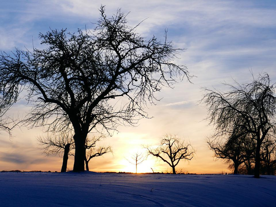 Winter Mood, Tree, Sunset, Kahl, Snow, Winter, Cold