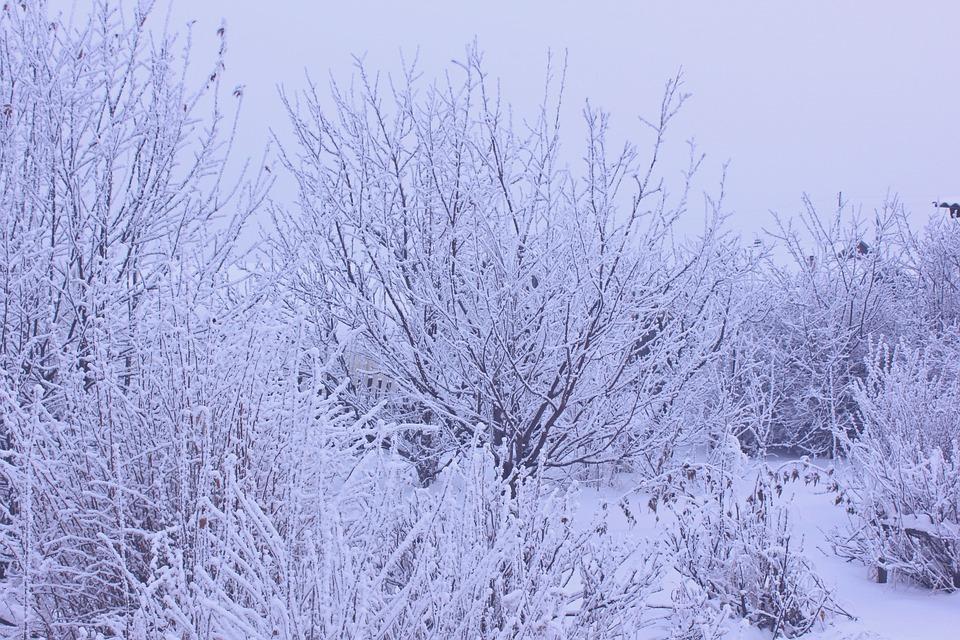 Leann, Trees, Landscape, Cold, Snow, Nature