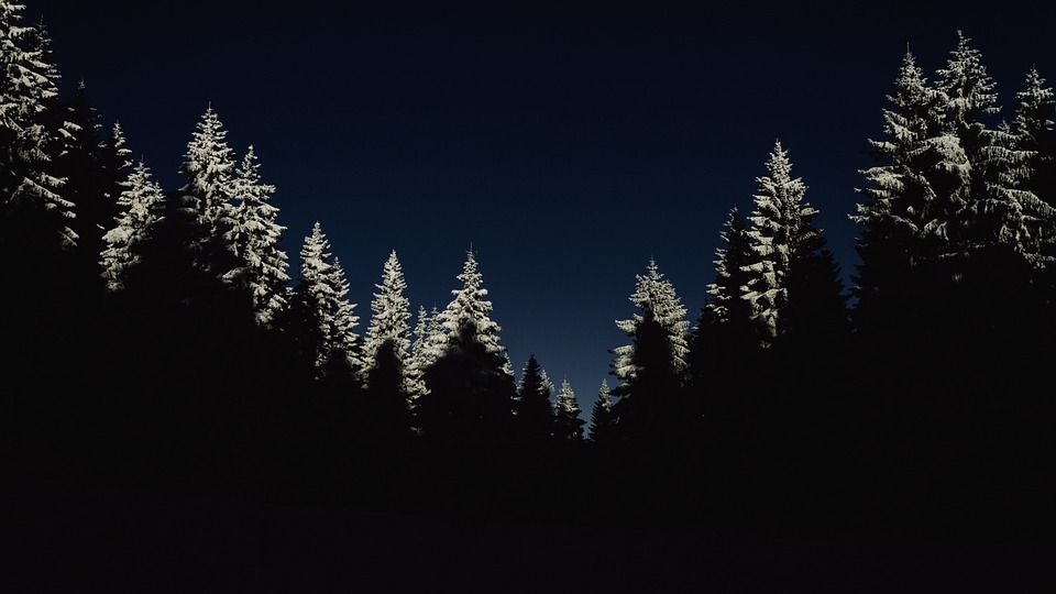 Cold, Dark, Forest, Nature, Night, Silhouette, Snow