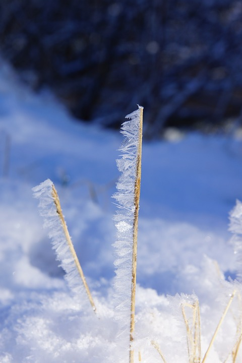 Nature, Winter, Snow, Cold