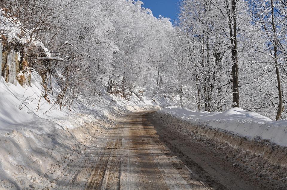 Winter, Snow, Nature, Ice, Cold, Tree