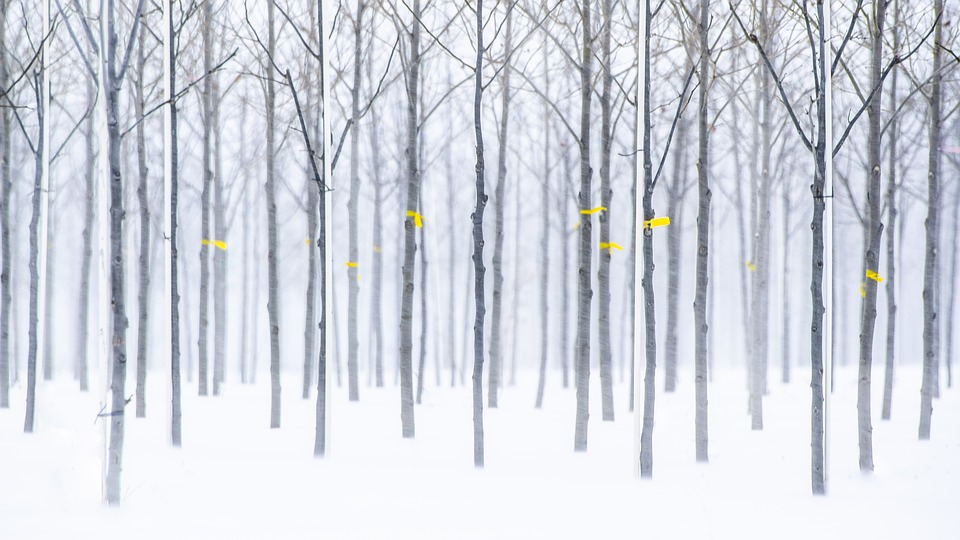Trees, Winter, Orchard, Tagged, Snow, Nature, Cold