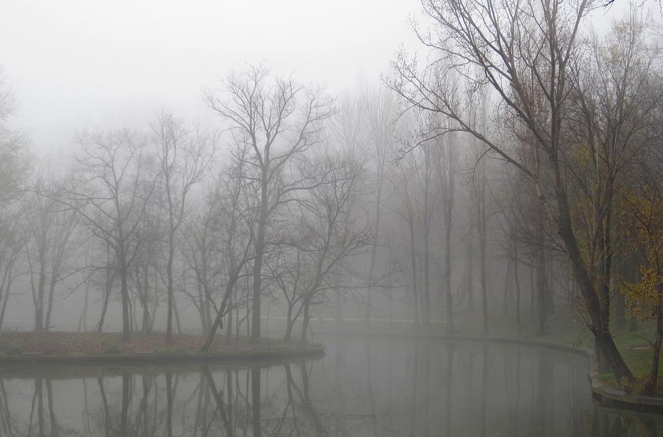 Fog, Winter, Nature, Landscape, Season, Cold, Tree