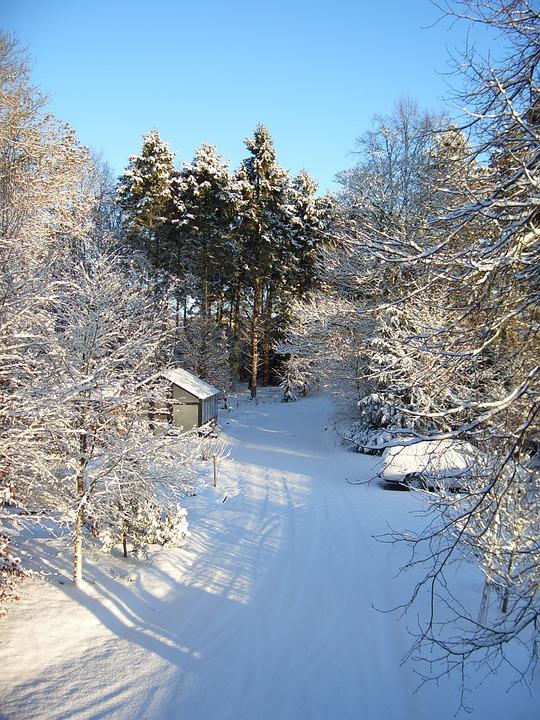 Snow, Winter, White, Cold, Season, Frost, Snowflake