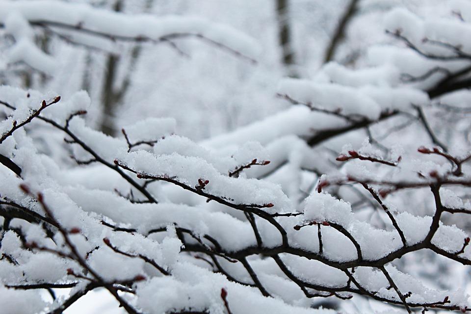 Snow, Snowflakes, Winter, White, Cold, Christmas