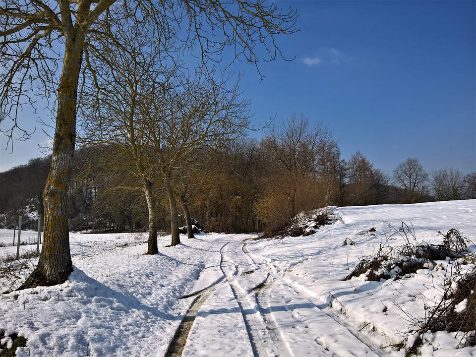 Winter, Snow, Frost, Cold, Frozen