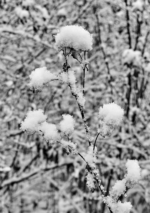 Snow, Snowflake, Snowflakes, Winter, Cold, Leaves