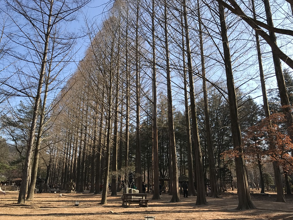 Nami Island, Winter, Cold, Trees, Park, Dry