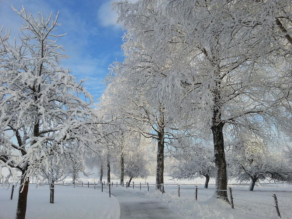 Winter Morning, Snow, Nature, Cold, Winter Time, Trees