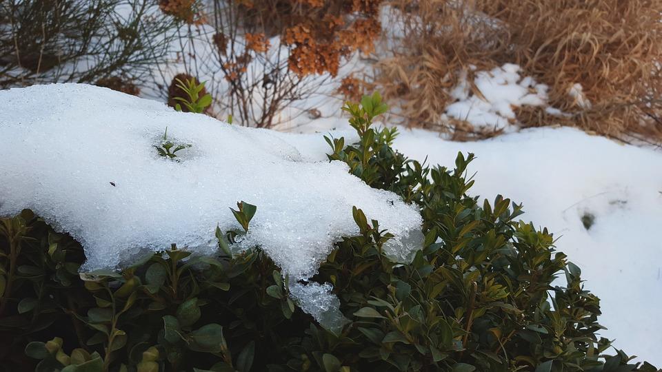 Snow, Cold, Winter, White, Bush