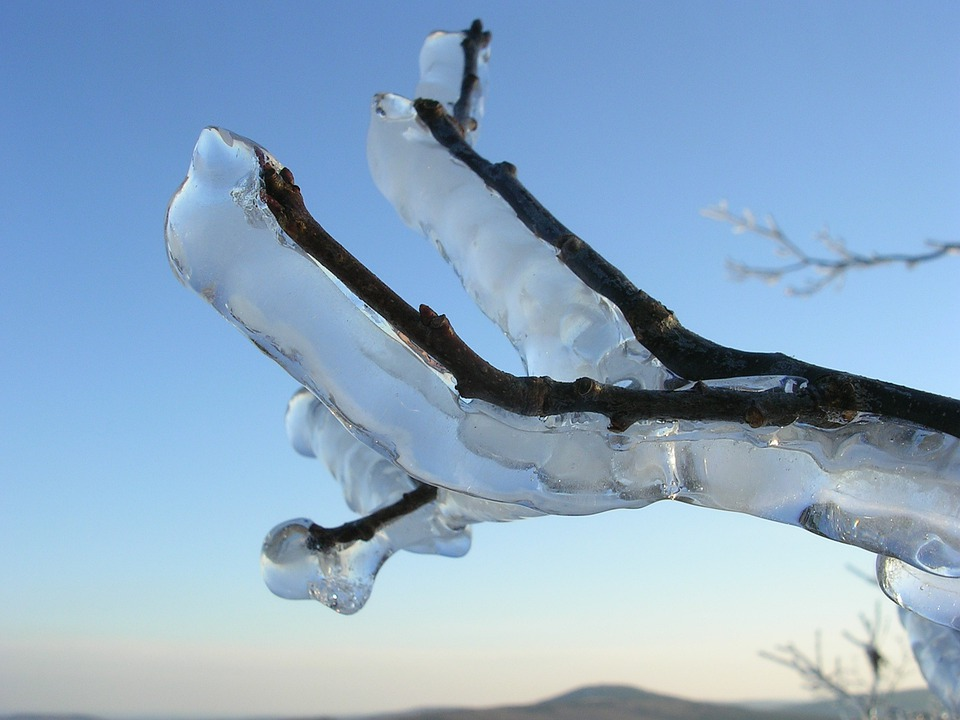 Ice, Iced, Branch, Cold, Coldsnap, Frost, Winter