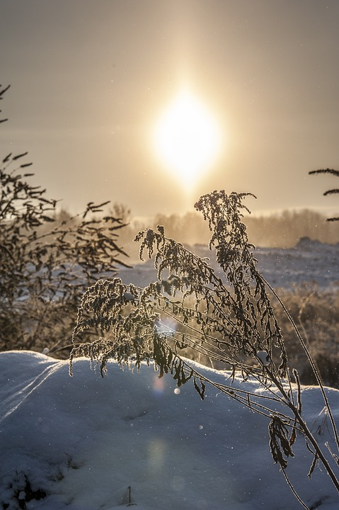 Winter, Cold, Plant, Snow, Wintry, Ice, Winter Cold