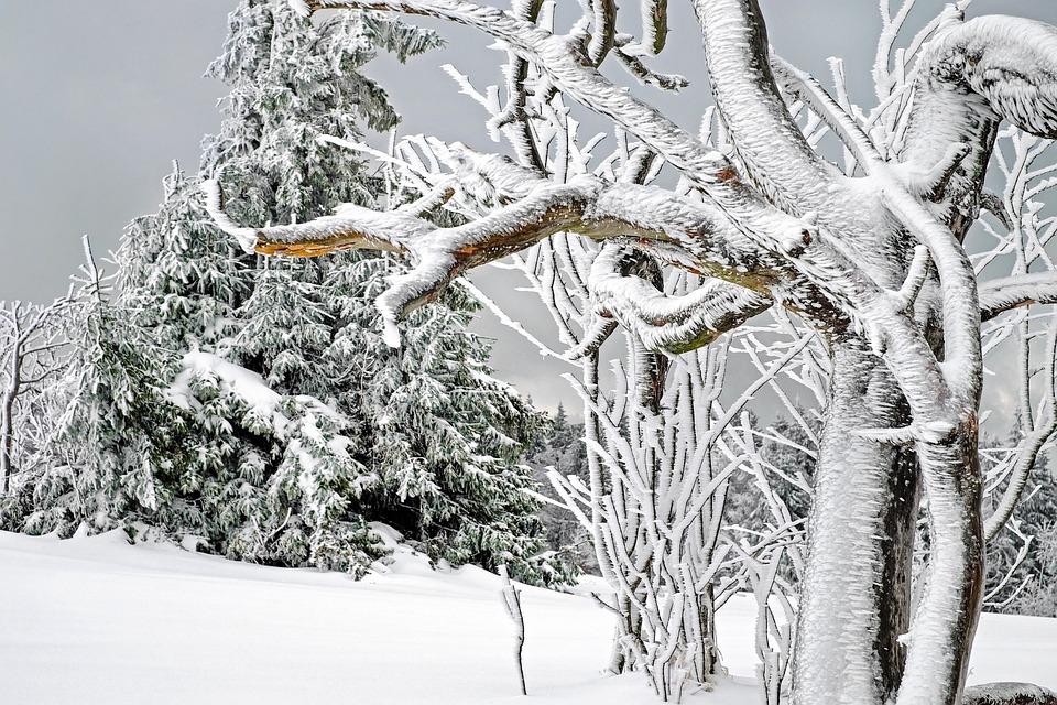 Winter, White, Cold, Snow, Snow Magic, Tree