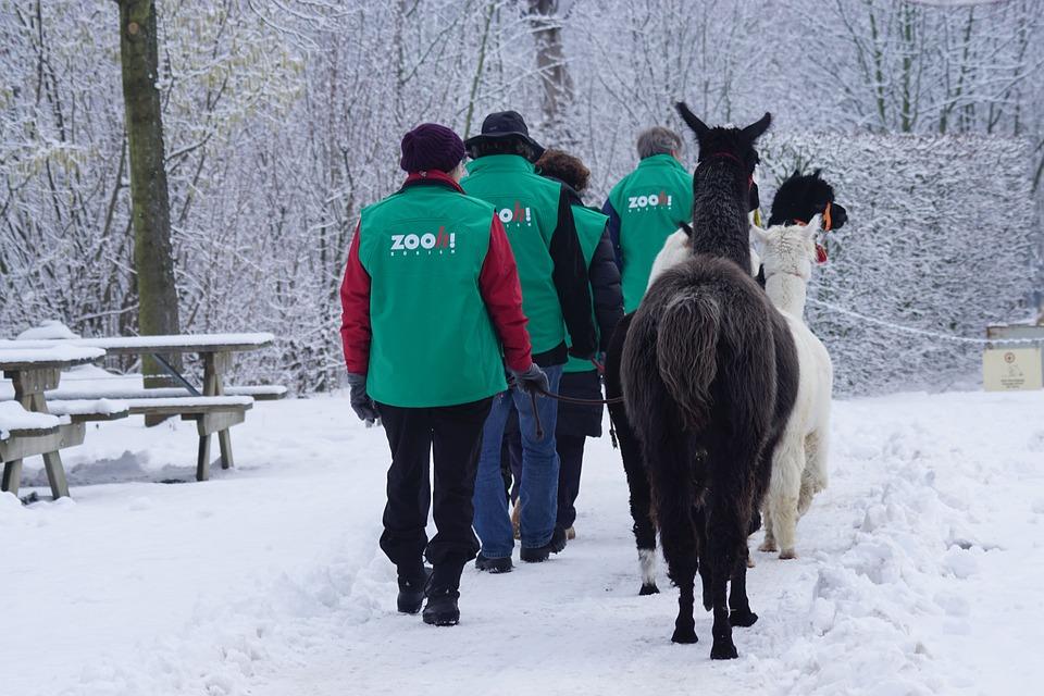 Walk, Human, Animal, Winter, Snow, Cold, Zoo