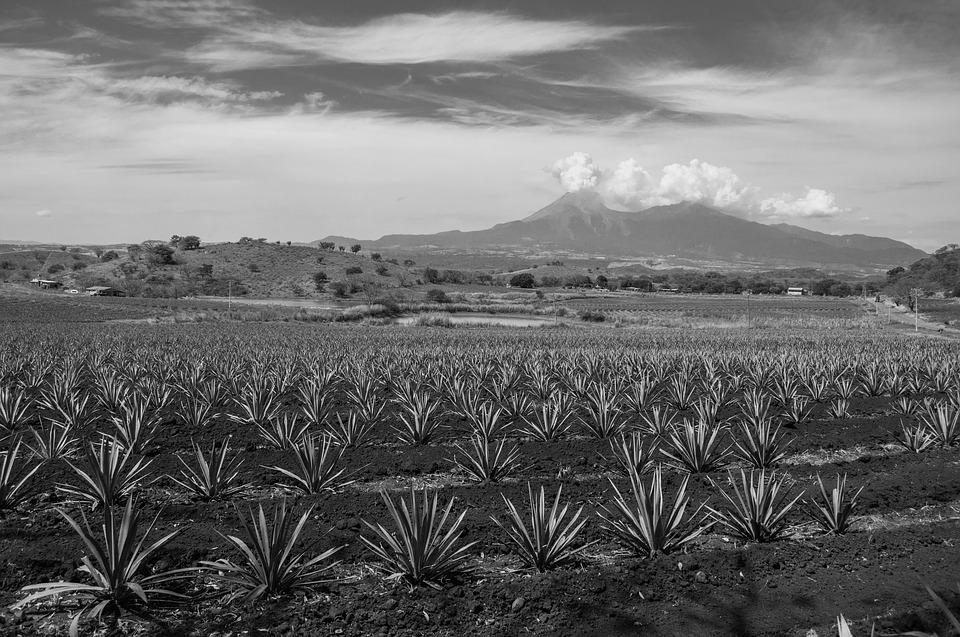Black And White, Volcano, Agave, Landscape, Colima