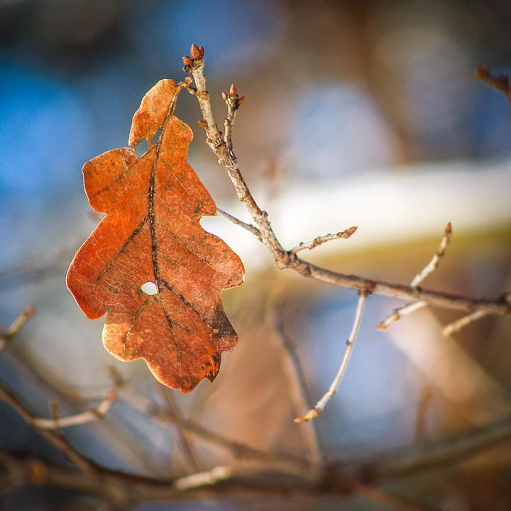 Autumn, Leaf, Orange, Winter, Collapse, Nature, Season