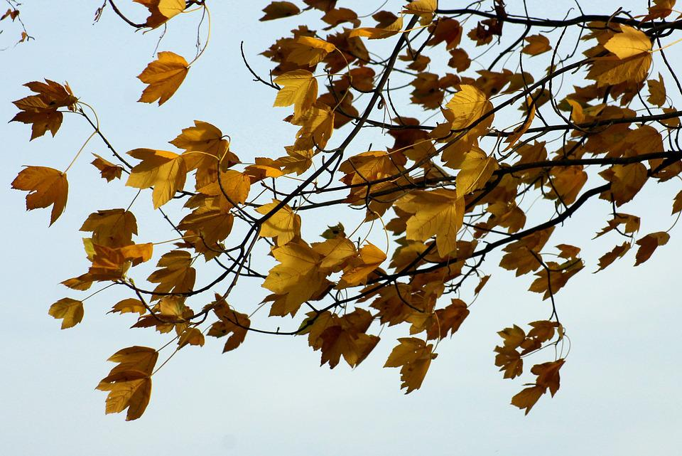 Foliage, Autumn, Wind, In The Fall, Collapse, Clear