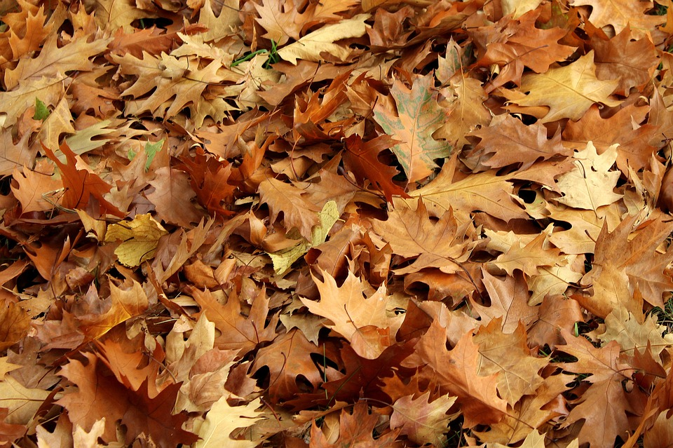 Foliage, Dry Leaves, Autumn, Nature, Collapse, October