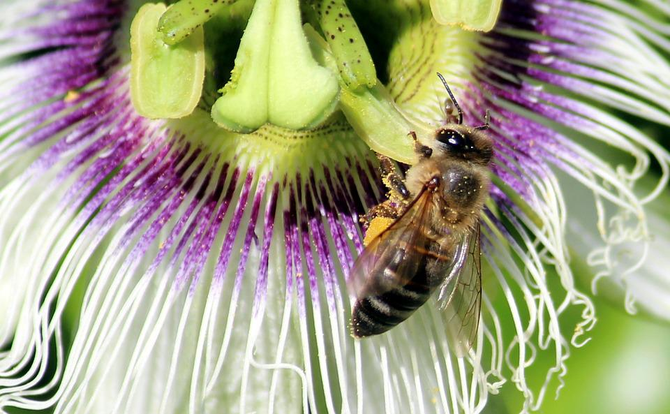 Blossom, Bloom, Bee, Collect Honey, Purple, Insect