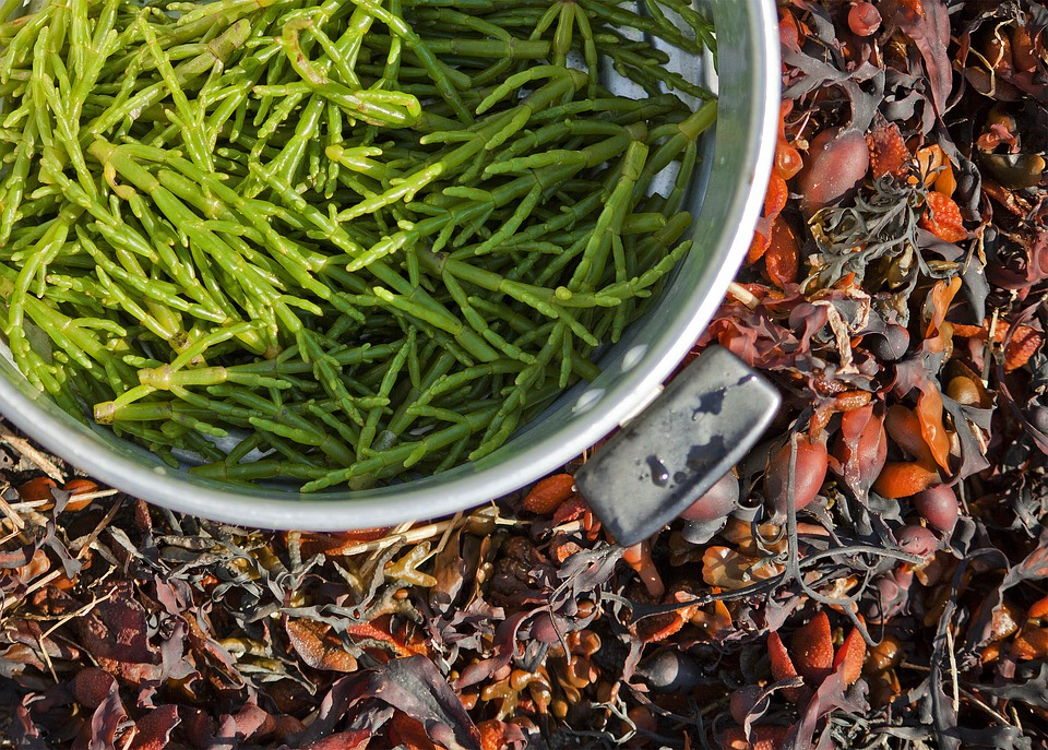 Samphire, Foraging, Nature, Collecting Free Food