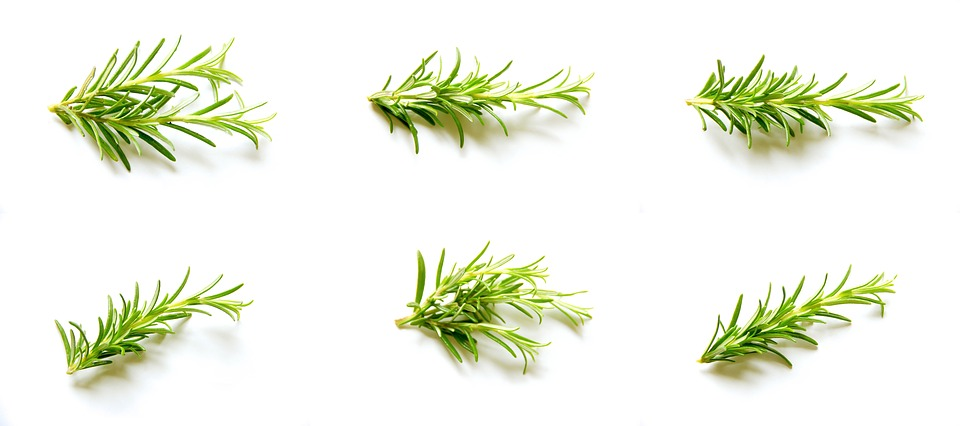Rosemary, Set, Collection, Natural, Organic, Spice