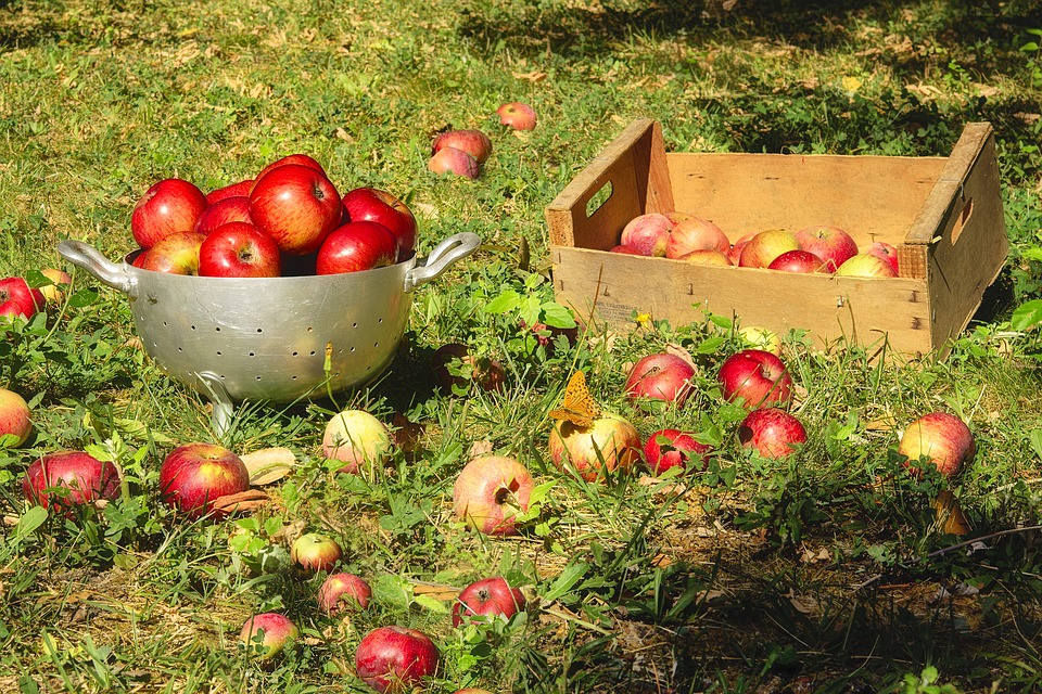 Apples, Fruit, Collection, Fall, Red, Sweet, Crunchy