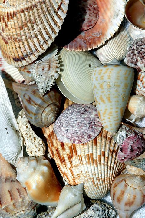 Beach Shells, Beach, Shell, Collector, Array, Pattern
