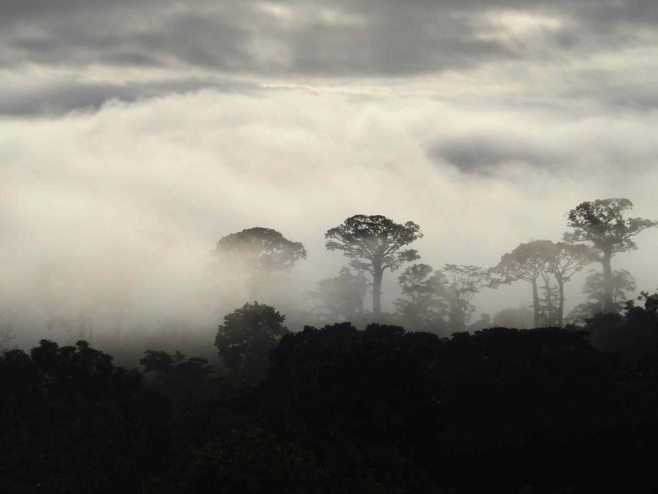 Niebla, Morning, Colombia, Landscape