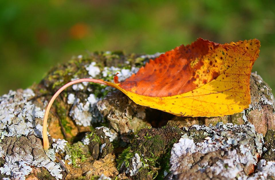 Leaf, Nature, Autumn Leaf, Color