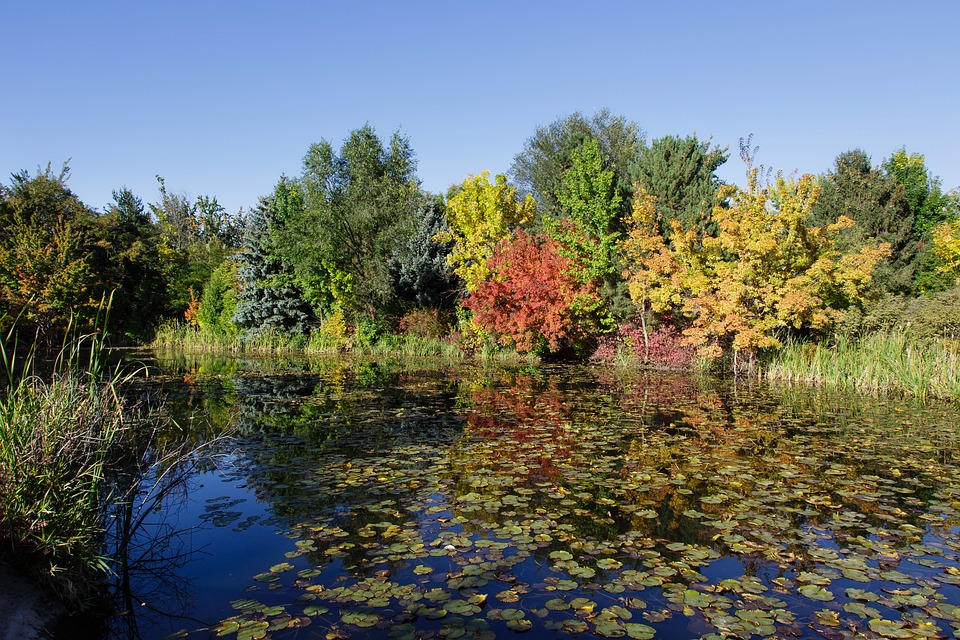 Fall, Autumn, Pond, Trees, Color, Leaves, Water Lilies