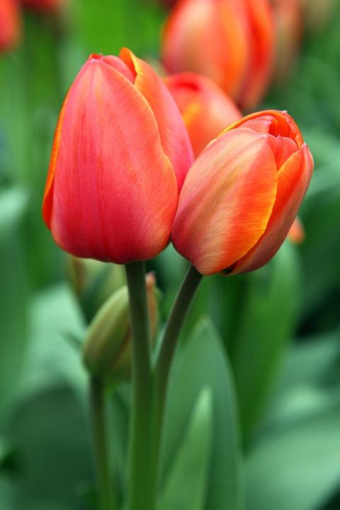 Background, Bloom, Blooming, Blossom, Color, Flora