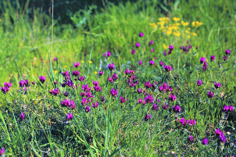 Flowers, Purple, Green, Color, Nature, Plant, Blooming