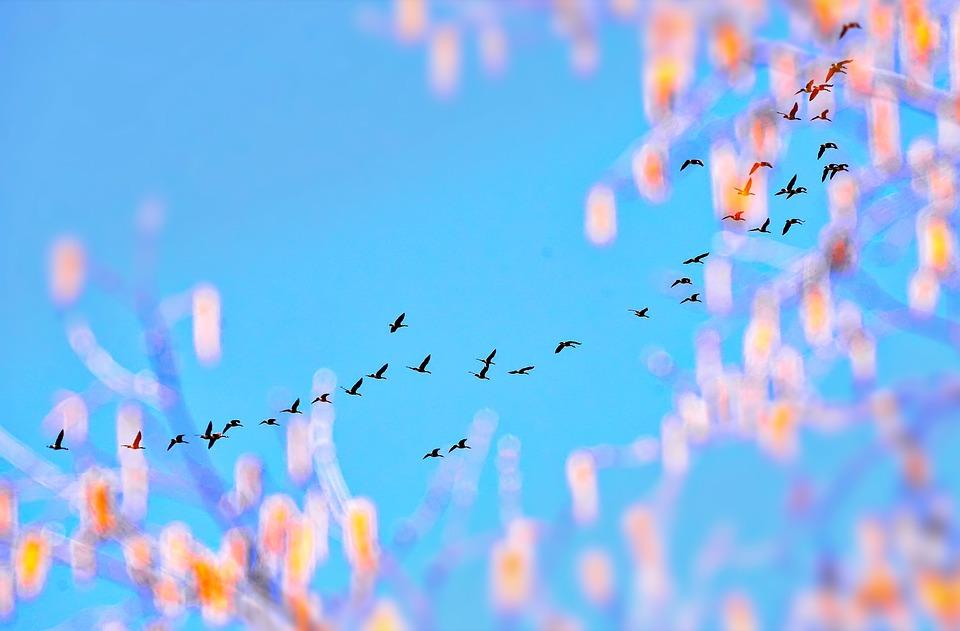 Geese, Sailboat, Sky, Blue, Color, Québec